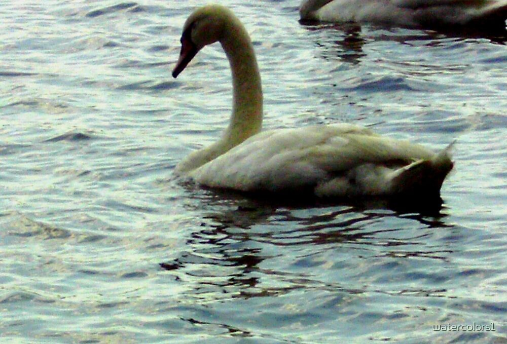 Swan on Lake Attitash by watercolors1