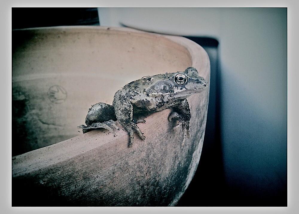 Frog by Paul Howard