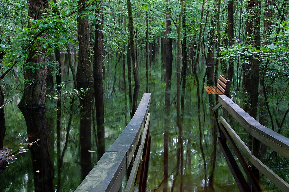 A Path to Mirrors by BrianDawson