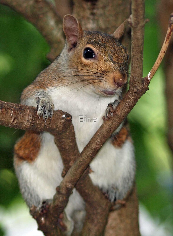 """My name is """"Feisty"""" and I'm a nut-a-holic !  by Bine"""