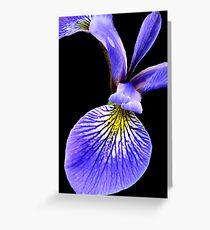 Blue Flag Iris Greeting Card