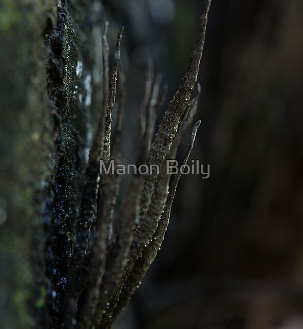 zombie fingers by Manon Boily