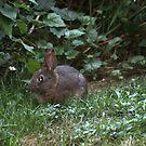Bunny  by Annie Underwood