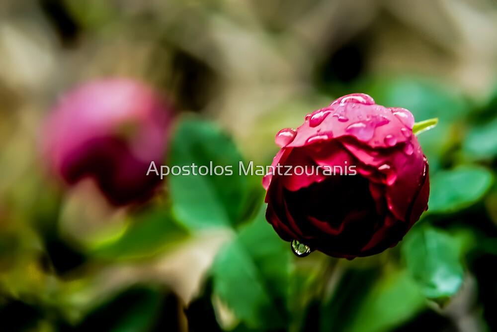 Tears in the Rain by Apostolos Mantzouranis