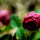 Tears in the Rain by Apostolos Mantzouranis
