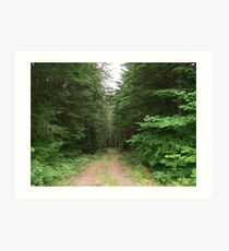 Trail through the woods in Oregon Art Print