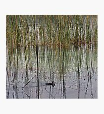 In the Reeds Photographic Print