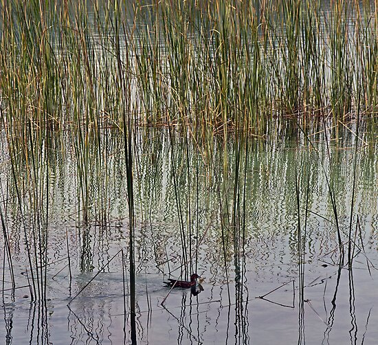 In the Reeds by Maureen Anderson