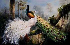 beauty of peacock  by mariemariam