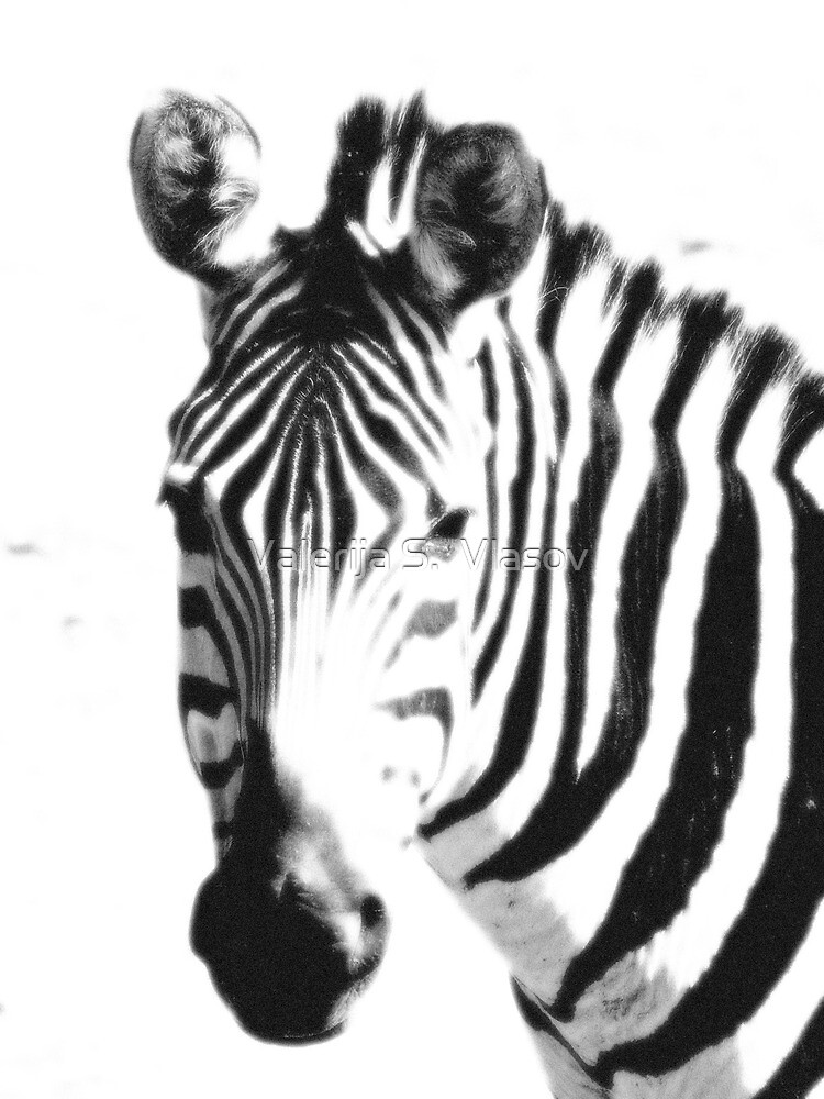 Zebra close up black & white by Valerija S.  Vlasov