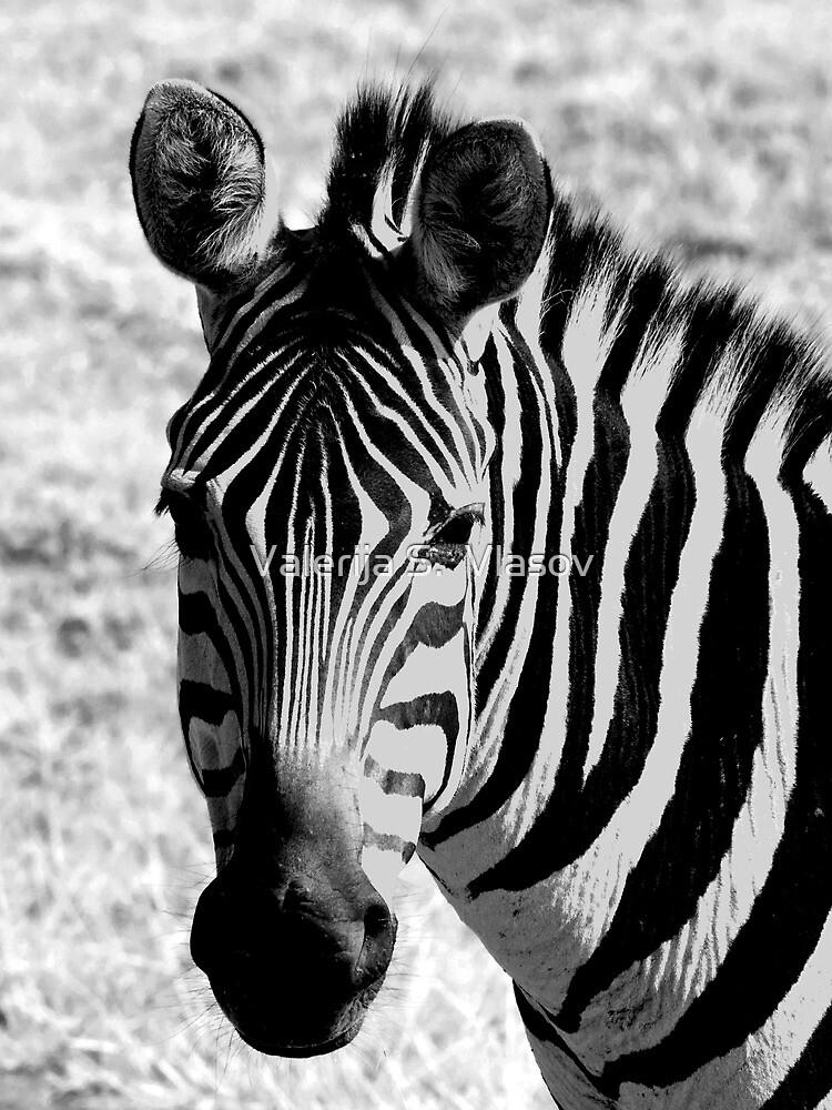 Plains Zebra black & white 1 by Valerija S.  Vlasov