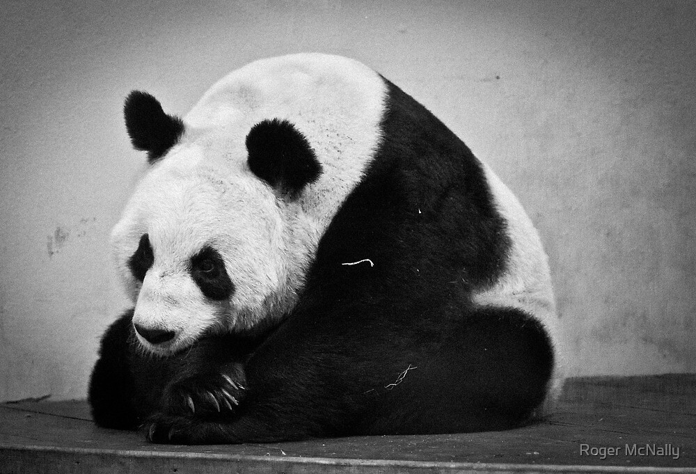 Tian Tian by Roger McNally