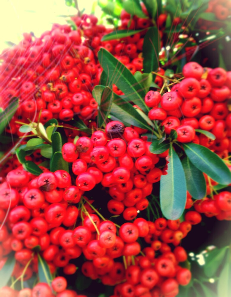 Red Berries by ryoung2207