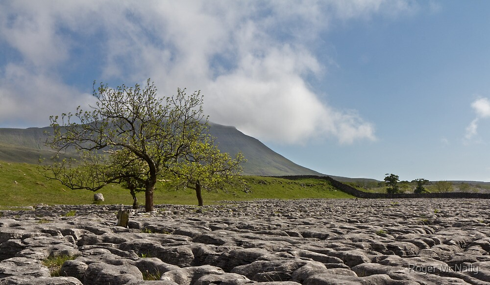 Ingleborough by Roger McNally