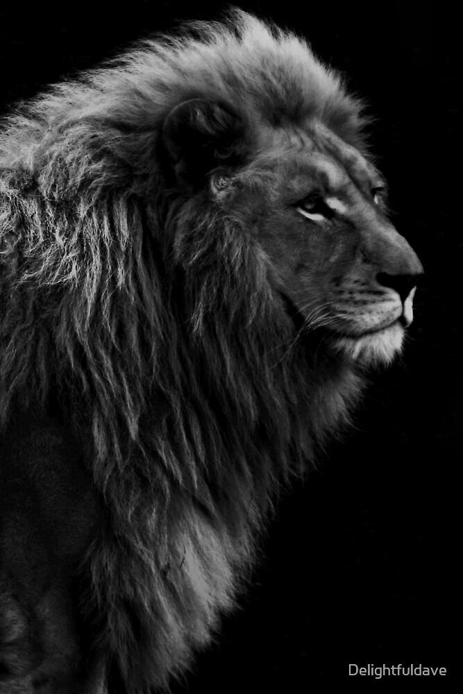 White Lion B&W by Delightfuldave