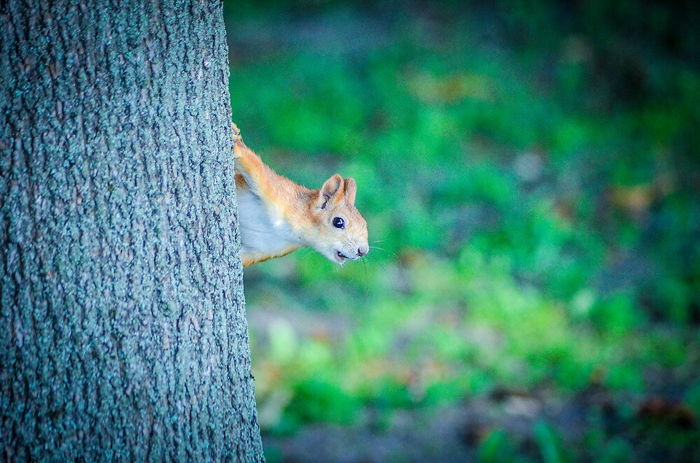 Squirrel by andrewsparrow