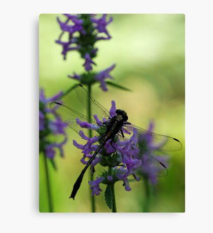 Dragonfly at Dusk Canvas Print