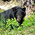 Mom Black Bear by Luann wilslef