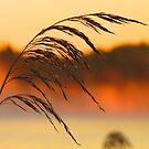 Zen Dawn by Alex Call