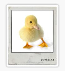 Duckling Polaroid Sticker