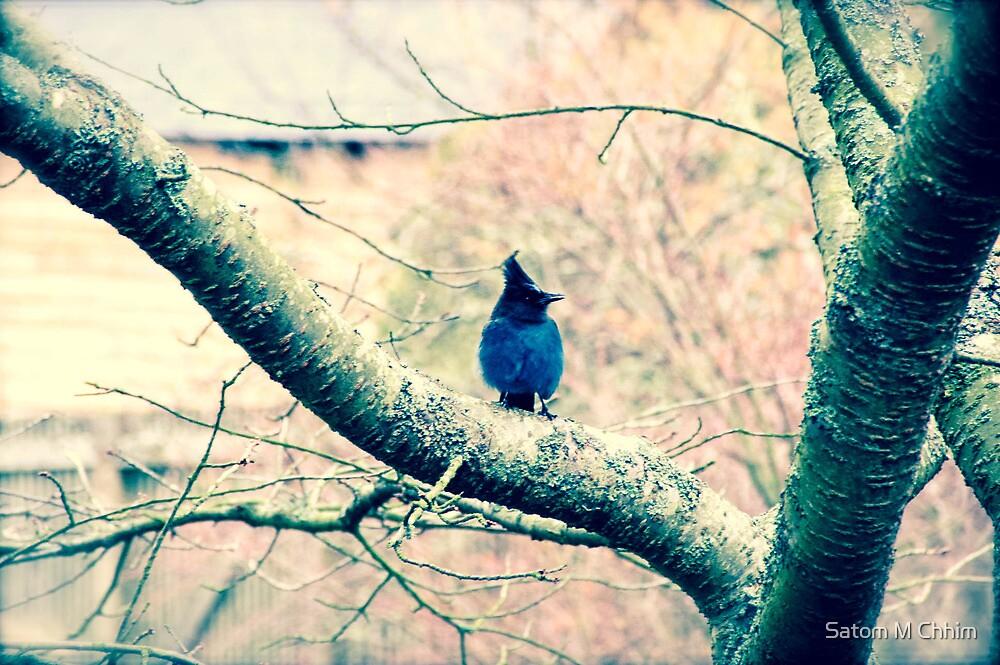 Blue Jays II by Satom M Chhim
