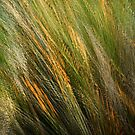 Autumn grasses by Geraldine Lefoe