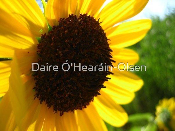 Sunflower by Daire Ó'Hearáin-Olsen