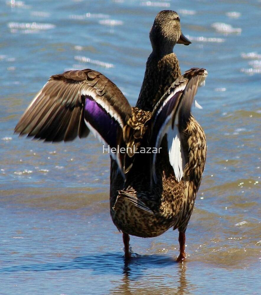 Birds of the Beach by HelenLazar