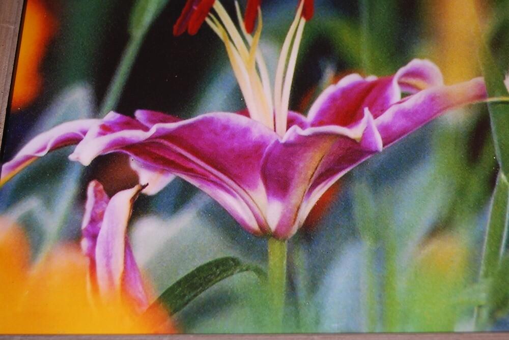 my flowers by mchopp