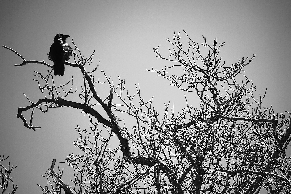 Tree with a Crow in It by Nazareth