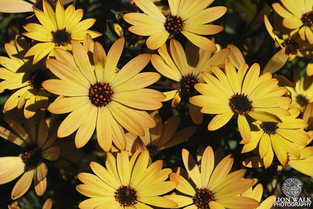 Beautiful Yellow Flowers by Jalil al-Hamza