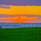 Sunset in the Wheat Belt by Todd Kluczniak