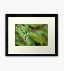 Drops on a leaf Framed Print