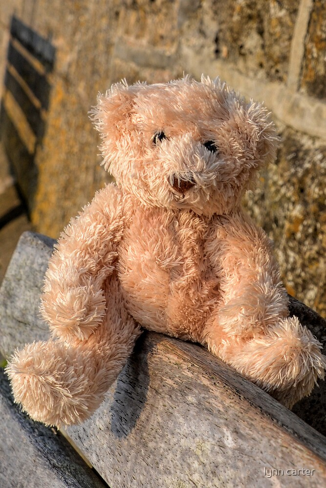 Teddy At  The Harbour by lynn carter