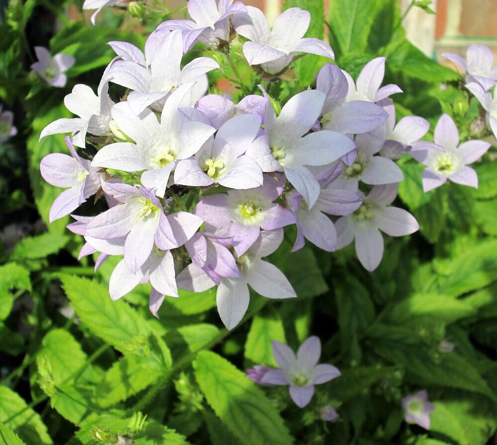 a pretty light blue flower by margaret hanks