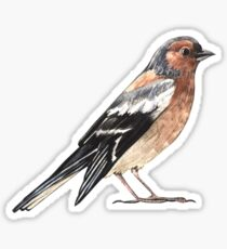 Nightingale Sticker