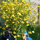 bunch of wild buttercups by Frances Anyika