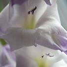 lilac soft focus by Frances Anyika