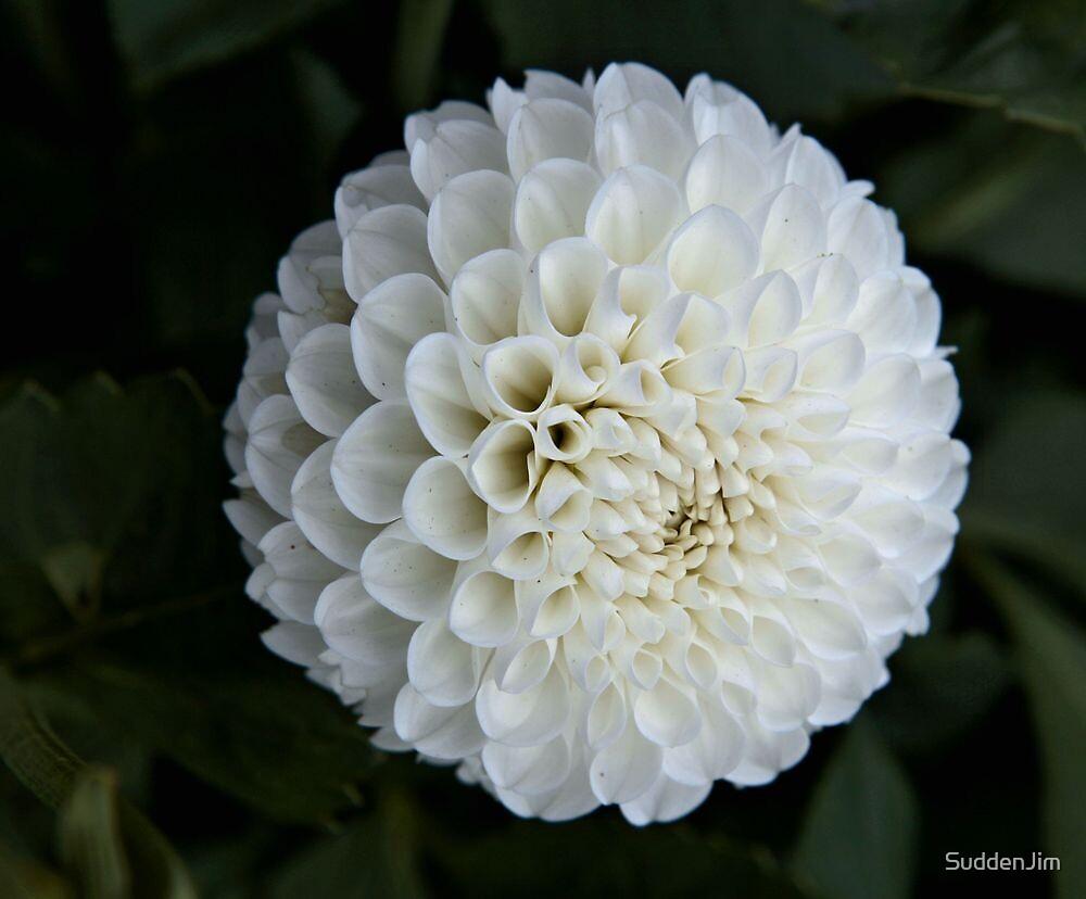 White by SuddenJim