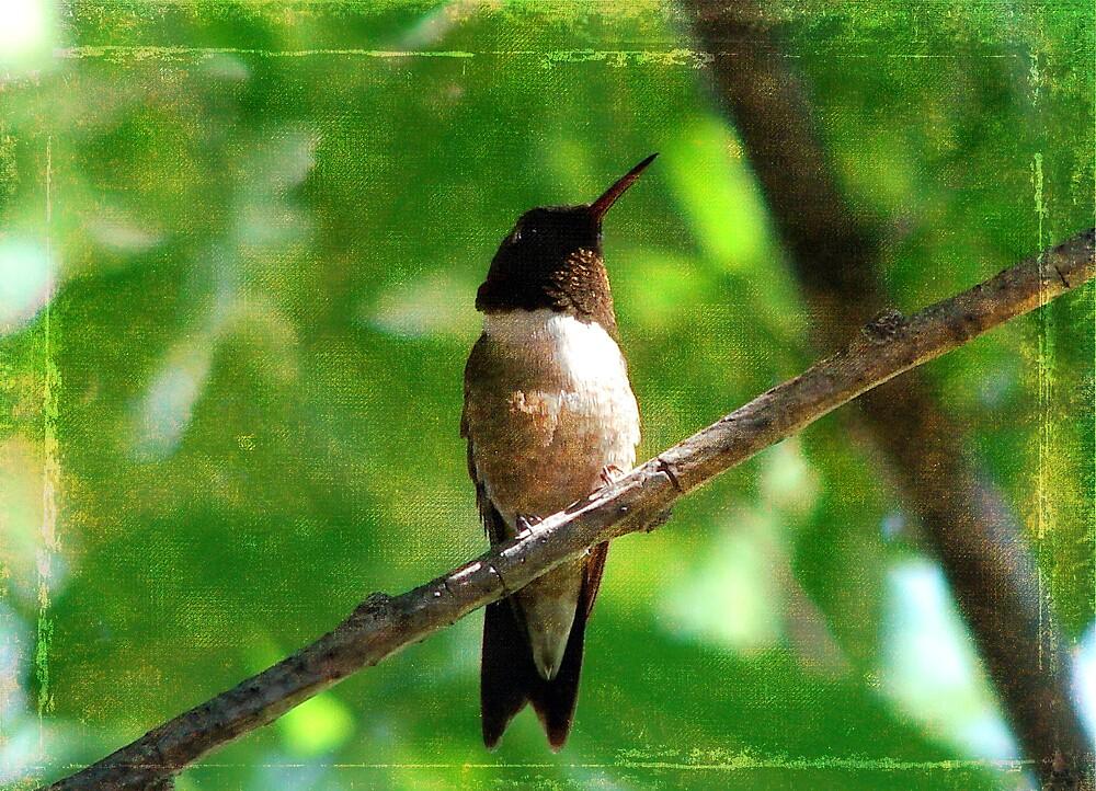 Hummingbird Morning by angelandspot