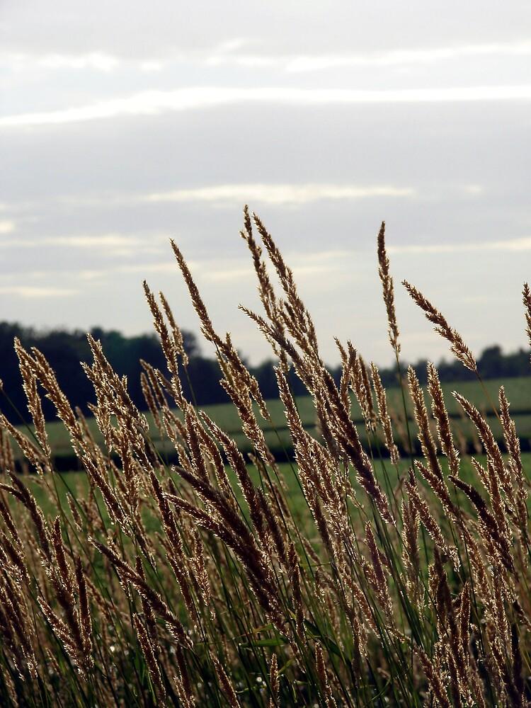 Grass Waving in the Wind by angelandspot