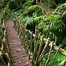 Puzzlewood by CJ B