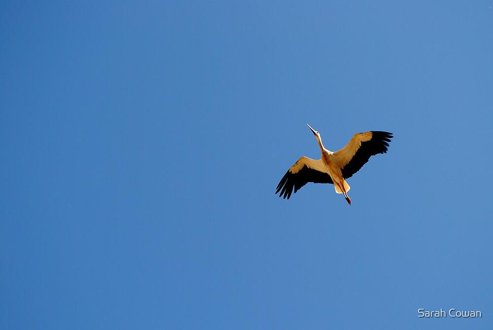 Stork in Flight by Sarah Cowan