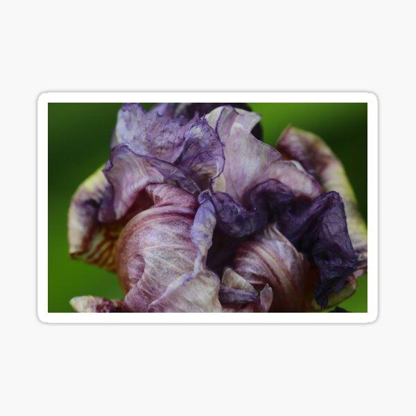 End Of An Iris Sticker