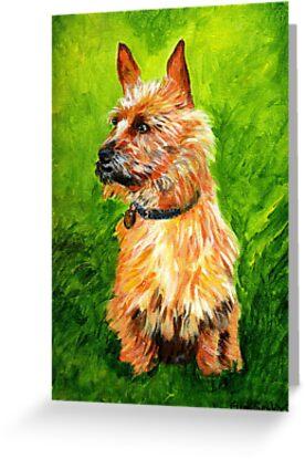 Australian Terrier Dog Portrait by Oldetimemercan