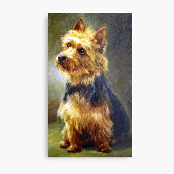 Australian Terrier Dog Portrait Metal Print