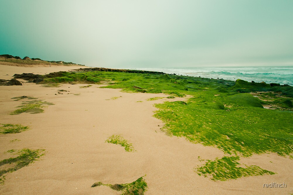 Green field by redfinch