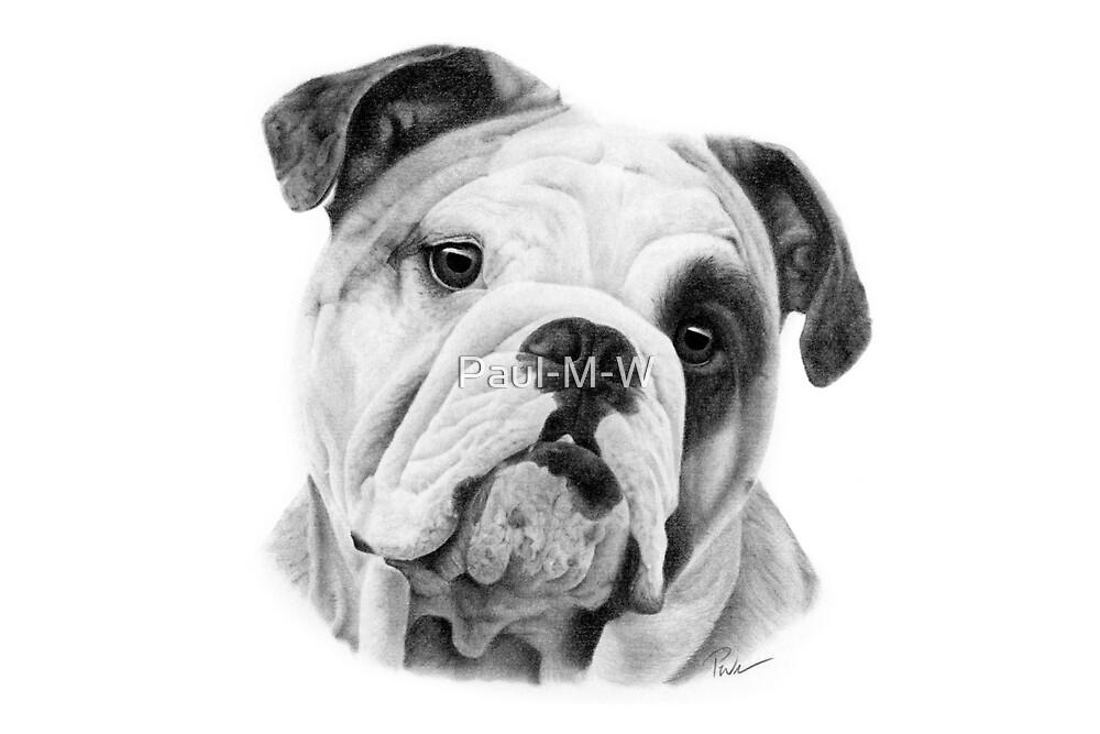 Dog in Pencil by Paul-M-W