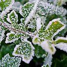 Winter Frost II by Adam Le Good