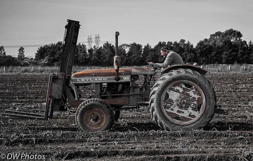 Farmer Joe by D W